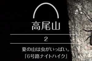 【高尾山】#2 夏の山は虫がいっぱい。「6号路ナイトハイク」