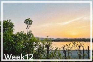 Week12「遊休農地から畑を作れる強さを身につけて、障子をすぐに張り替えられる強さを身につけた」