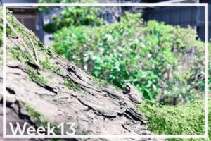 Week13「井上糀店の米糀で手前味噌づくり」